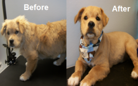 Dog grooming in myrtle beach sc dog groomers in myrtle beach sc quality dog grooming in myrtle beach solutioingenieria Image collections